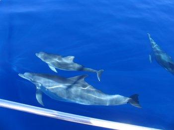 svømme med delfiner